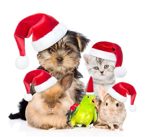 merry christmas   pets  owners argos pet insurance