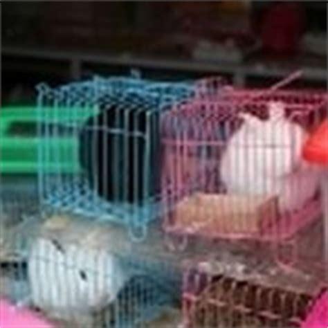 gabbia per conigli nani gabbie conigli nani conigli nani