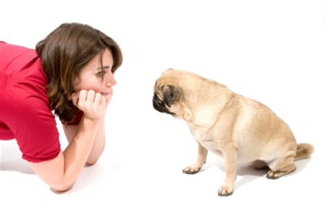 how to communicate with dogs scared of fireworks top 3 home remedies