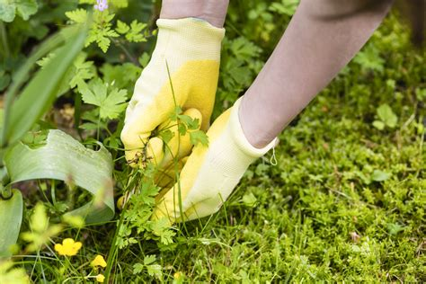 How To Cut Weeds In Backyard by 5 Edible Weeds You Ll Want Growing All Your Yard