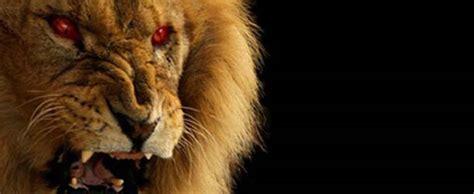 imagenes de leones asesinos los devoradores de hombres de tsavo 191 demonios o asesinos