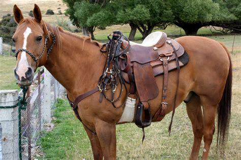 horse saddle buying guide to saddles maryland pets