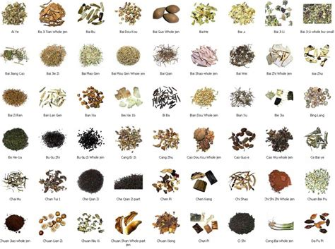 List Of Detoxing Herbs by Medicinal Herbs Wood Element Acupuncture An Herbal