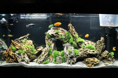 mbuna aquascape mbuna aquascape 28 images cichlid forum aquascaping mbuna tank aquascape idea