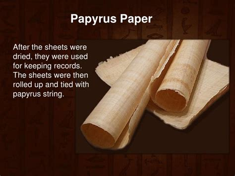 Reed Used For Paper - ancient