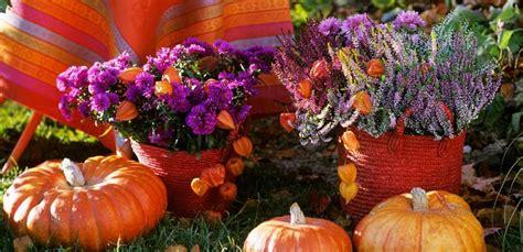 piante e fiori autunnali speciali piante e fiori le idee per l autunno leitv