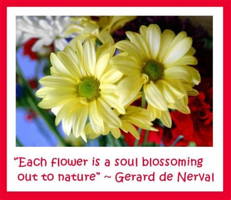 Flower Quotes Flowers Quotes And Quotations Of Flowers Flowers Magazine