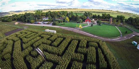 Corn Maze Botanic Gardens Best Corn Mazes In Colorado