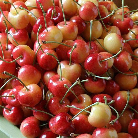 fruit company rainier cherries the fruit company 174