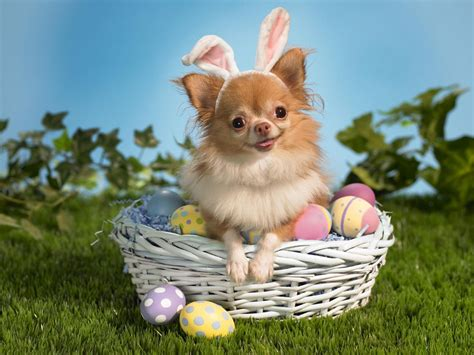easter puppy happy easter k9 to 5