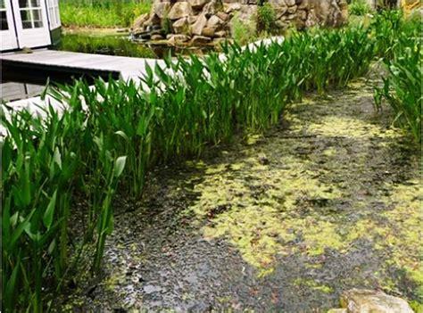Wasserpflanzen Pflege by Wasserpflanzen Im Filtergraben Gartenteich Planung Bau
