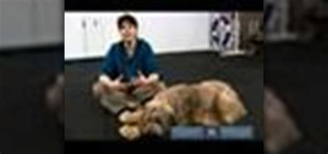 how to your obedience how to your for a rally obedience show 171 dogs wonderhowto
