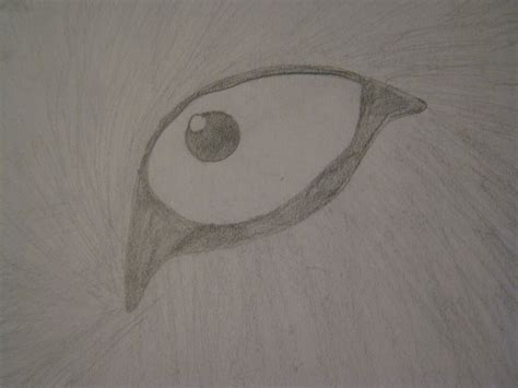by terry eyes buy by terry eyes shopfitness wolf eye sketch by xxxterrynxxx on deviantart