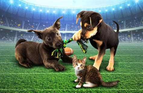 puppy superbowl from puppy bowl to overtime bowl for the whole family momaha omaha