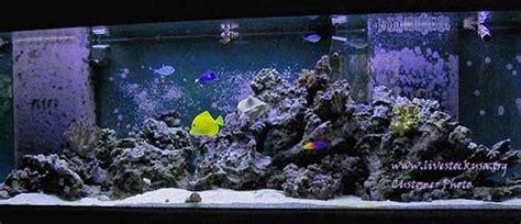 live rock aquascape marine aquarium reef tank customer photos live rock aquascapes