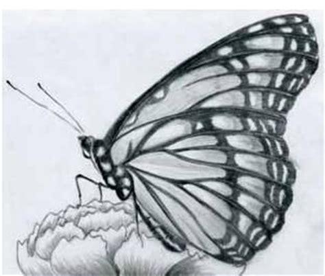 imagenes de mariposas para dibujar a lapiz imagenes de mariposas para dibujar a lapiz buscar con