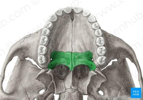 palatine bone palatine bone os palatinum kenhub
