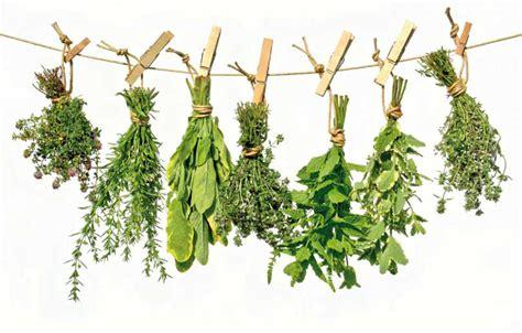 olguchiland las plantas ii ecomerci somos artesanos las plantas medicinales