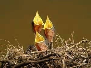 baby birds palmcoastnow s blog