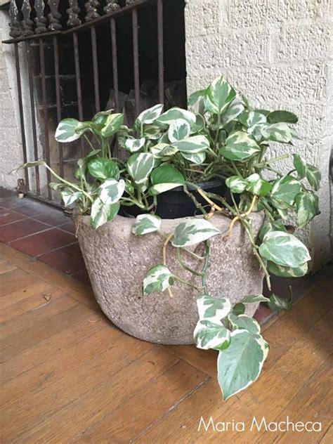 diy hypertufa plant pots grillo designs
