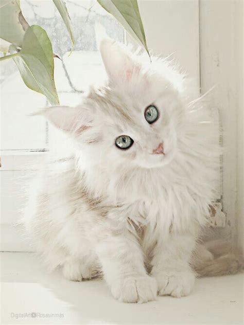 White cats are beautiful (30 photos)   Kitty Bloger