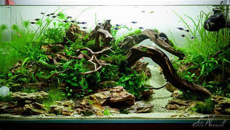 xxcm planted aquascape week  ive added