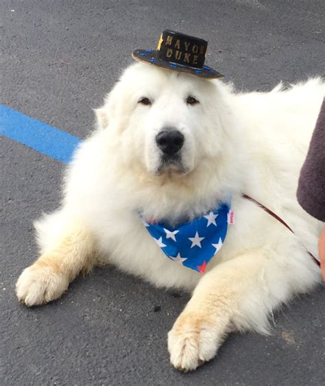 minnesota mayor canine candidate re elected minnesota town mayor minnesota radio news