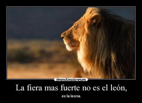 imagenes de leones fuertes la fiera mas fuerte no es el le 243 n desmotivaciones