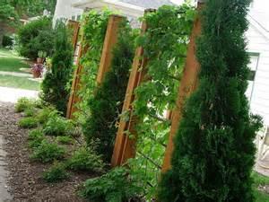 Garden Trellis Design Garden Fence Trellis Design Ideas Home Interior Design