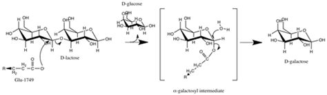 diagram of lactose and lactase reaction images