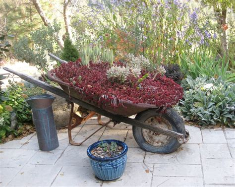 Wheelbarrow Planter Ideas by Dragon S Blood And Snow Foothill Garden
