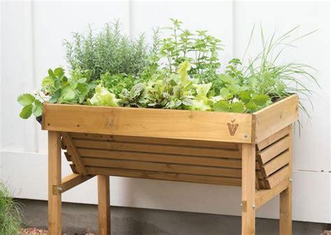 como iniciar um jardim de ervas aromaticas assim  faz