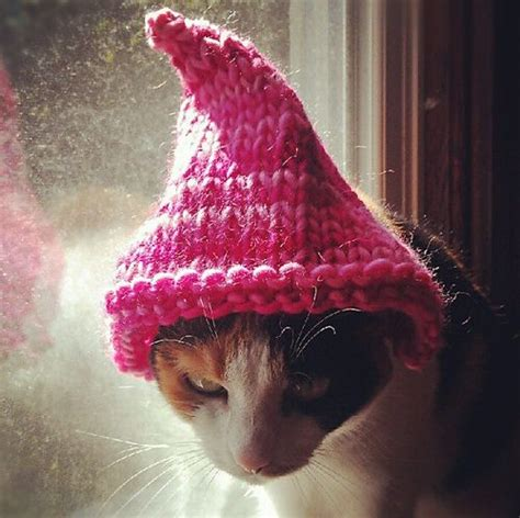 hats for cats knitting patterns 86 best knitted crocheted cat images on