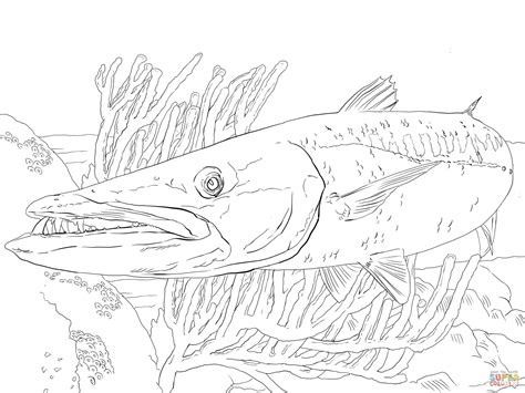 barracuda fish coloring page barracuda fish coloring page free printable coloring pages