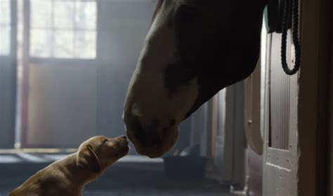 budweiser commercial budweiser commercials search engine at search