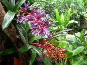 Plants From The Tropical Rainforest - plants tropical rainforest biome