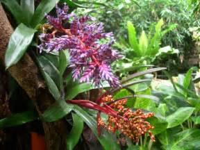 plants tropical rainforest biome - Plants Found In The Tropical Rainforest Biome