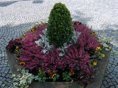 Str Ucher F R K Bel 2584 by Pflanzen K 252 Bel Winterhart Baum Und Rosenschule Zumpe