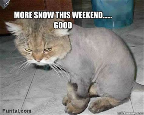 Angry Cat Meme Good - more snow this weekend good angry cat