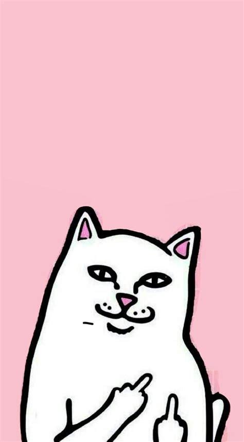 Middle Finger Cat Meme - best tumblr wallpaper ideas on pinterest tumblr iphone
