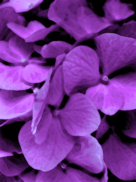 Purple Garden Flower The Best Purple Flowers For Your Garden Purple Flowers Purple Flowers Wallpaper