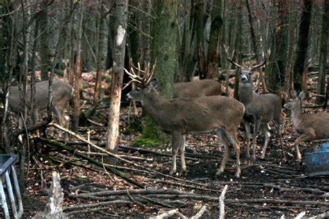 Sale Gunting image gallery new york whitetail deer