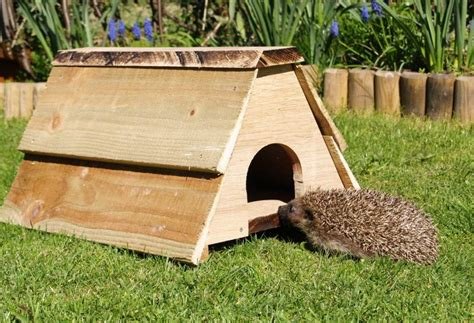 hedgehog houses to buy buy hedgehog house 28 images buy garden trading orkney