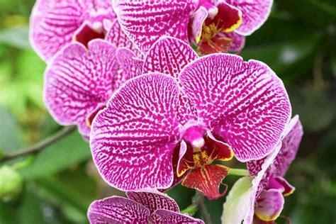 orchidee in casa come coltivare le orchidee in casa donnad