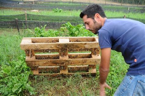 alimentazione lumache di terra come realizzare un allevamento di lumache la storia della
