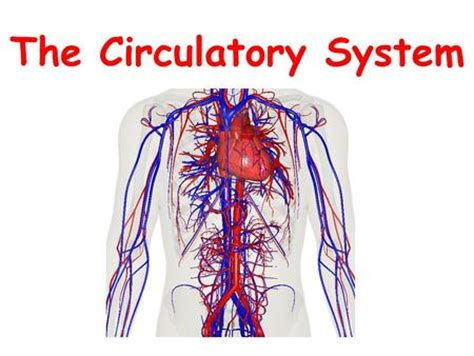 section 37 1 the circulatory system circulatory system ppt video online download
