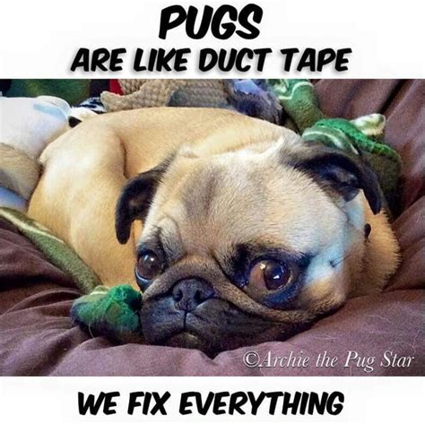 quotes on pugs 25 best pug quotes on a pug pugs and quotes sad