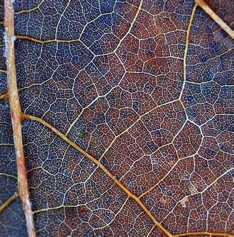 patterns in nature leaves amazing patterns of nature leaf inspiration pinterest