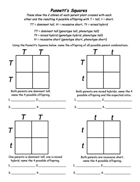 Punnett Squares Worksheet 5 best images of printable punnett square worksheets