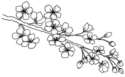 Cherry Blossom Branch Drawing Outline by Beccy S Place Blossom Branch
